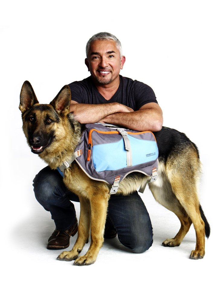 bluee & Grey Medium bluee & Grey Medium Cesar Millan Dog BackpackTM Medium