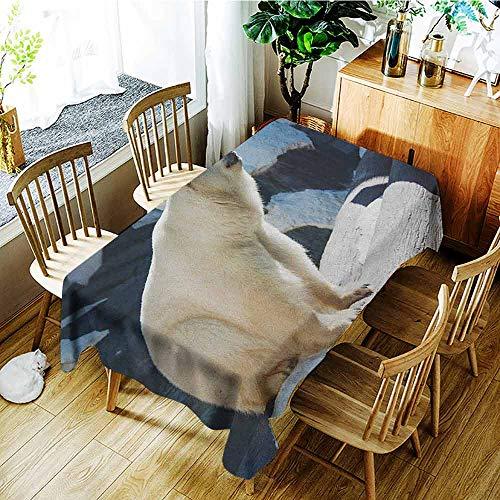 Potter Park Zoo Halloween (XXANS Fashions Rectangular Table Cloth,Zoo,Polar Bear Wildlife Park Rocks Water Cold Climate Tourist Attraction Image,Modern Minimalist,W52x70L Pale Blue Black)