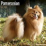 Pomeranian Calendar - Dog Breed Calendars - 2017 - 2018 wall Calendars - 16 Month by Avonside
