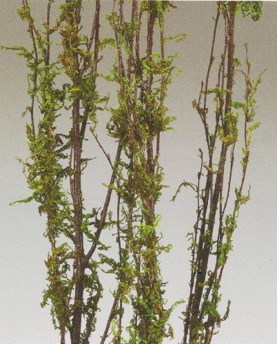 (GreenFloralCrafts Coastal Range Moss Branches 3-4 Ft, Pack of 5)