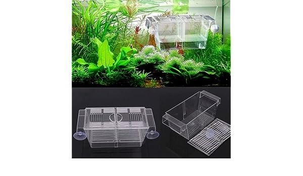 qingsb - Cajas de cría de Peces para criar y atrapar Peces, Accesorios para Acuario: Amazon.es: Productos para mascotas