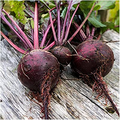 Package of 1,000 Seeds, Detroit Dark Red Beet (Beta vulgaris) Non-GMO Seeds By Seed Needs