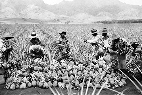 Pineapple Plantation in Hawaii - Vintage Photograph (12x18 SIGNED Print Master Art Print w/ Certificate of Authenticity - Wall Decor Travel (Plantation Pineapple Wall)