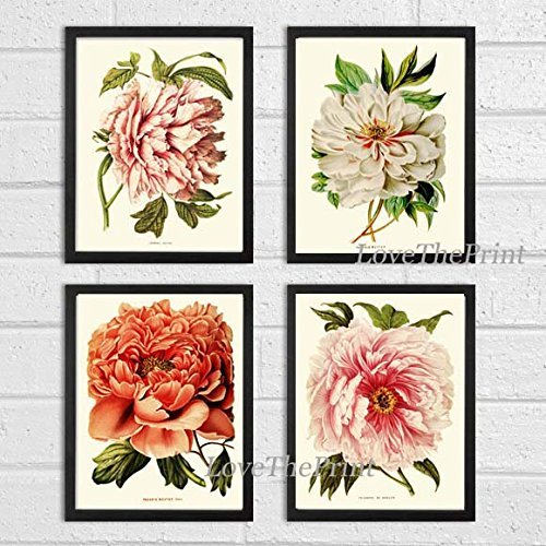 Coral Wall (Botanical Set of 4 Prints Antique Beautiful Large White Coral Peony Plants Flowers Illustration Home Room Decor Wall Art Unframed)