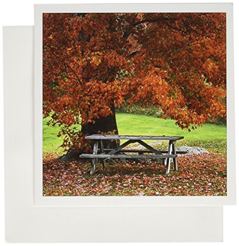 3dRose USA New York West Park Bench Under Maple in Autumn Greeting Cards, Set of 12 (gc_190601_2) - Maple Set Bench