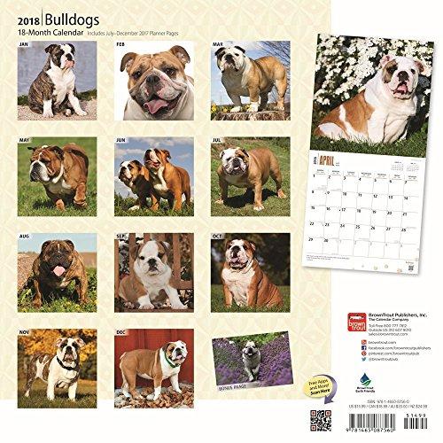 Bulldogs 2018 Wall Calendar Photo #3