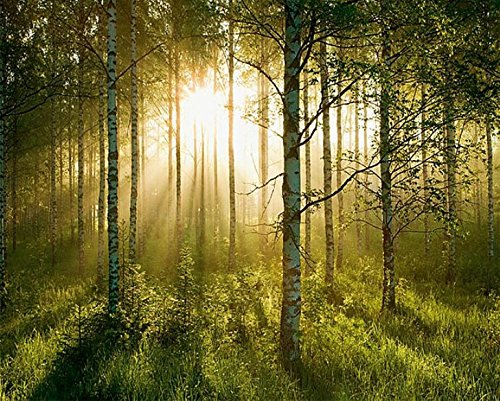 Sunlight Forest High Definition Wall Mural HUGE 12ft 6in Wide x 9ft High Covers an Entire Wall!