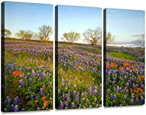 bluebonnets in texas hill country natural landscape stock pictures - Canvas Wall Art -Paintings Wall Artworks Pictures for Living Room Bedroom Decoration 3 Panels Home Wall Decor Posters