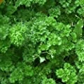 Everwilde Farms - Organic Moss Curled Parsley Seeds - Gold Vault Seed Packet