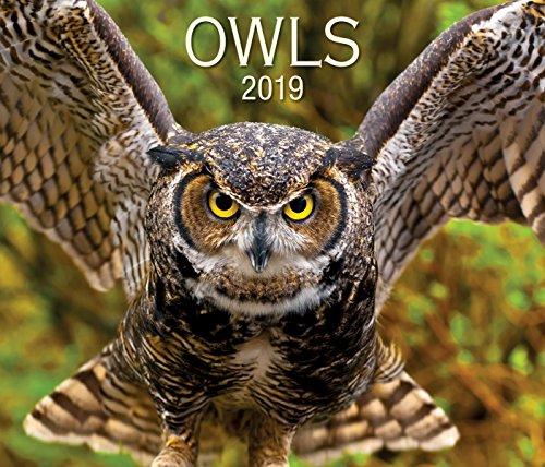 Owls 2019 -