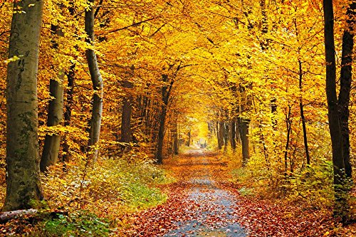 Wallmonkeys  Autumn Forest Peel and Stick Wall Decals