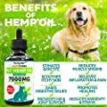 Kinpur (2 PACK | 7000MG) Hemp Oil for Dogs & Cats - Anxiety Relief for Dogs & Cats - Pet Hemp Oil - Supports Hip & Joint Health - Made in USA - Natural Relief for Pain - Omega 3, 6 & 9