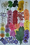 LoveDiyLife Mixed Multiple Pressed flowers, Mini Rose, Daisy, Larkspur, Queen Anne's Lace real pressed dried flowers