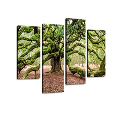 Amazon com: Angel Oak Tree Johns Island Charleston South