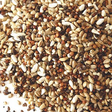 MALTBY'S STORES 5KG PIGEON CONDITION SEED MALTBY' S CORN STORES