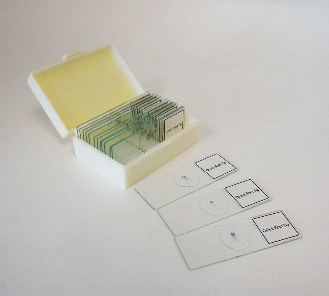 Prepared Slide, Plant Mitosis, Classpack of 15 Sides