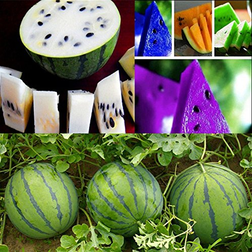 Rare Mix Colors Organic Watermelon Seeds Fruit Vegetables Garden Outdoor Garden Plant Seed by Carole4
