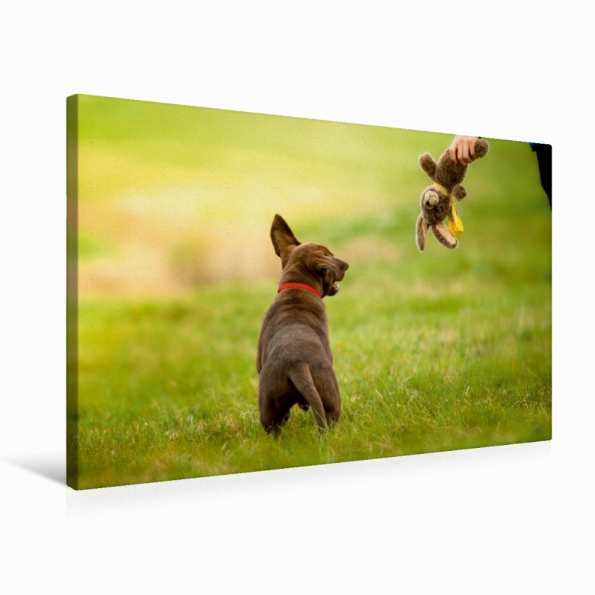 Calvendo Premium Textil-Leinwand 75 cm x 50 cm Quer Labrador Welpe   Wandbild, Bild auf Keilrahmen, Fertigbild auf Echter Leinwand, Leinwanddruck Tiere Tiere B01LCVU6EK Klassische Puzzles Online-Exportgeschäft | Ausgezeichnete Qualität