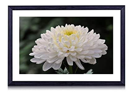 Amazon white chrysanthemum flower 28738 art print black white chrysanthemum flower 28738 art print black wood framed wall art picture mightylinksfo