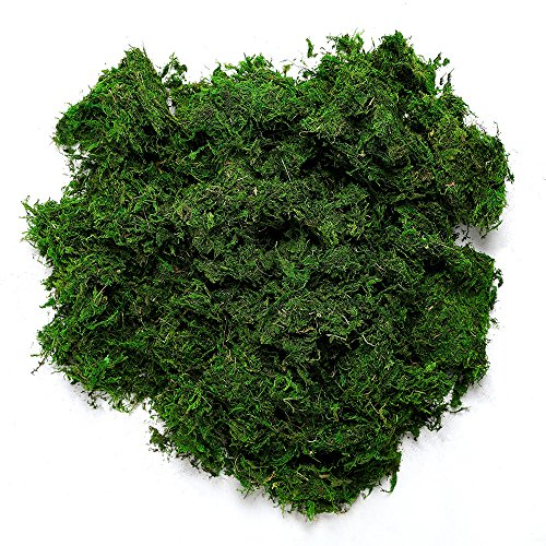 Byher 92926 Preserved Forest Moss, Fresh Green, 8oz (200 cubic inch)]()