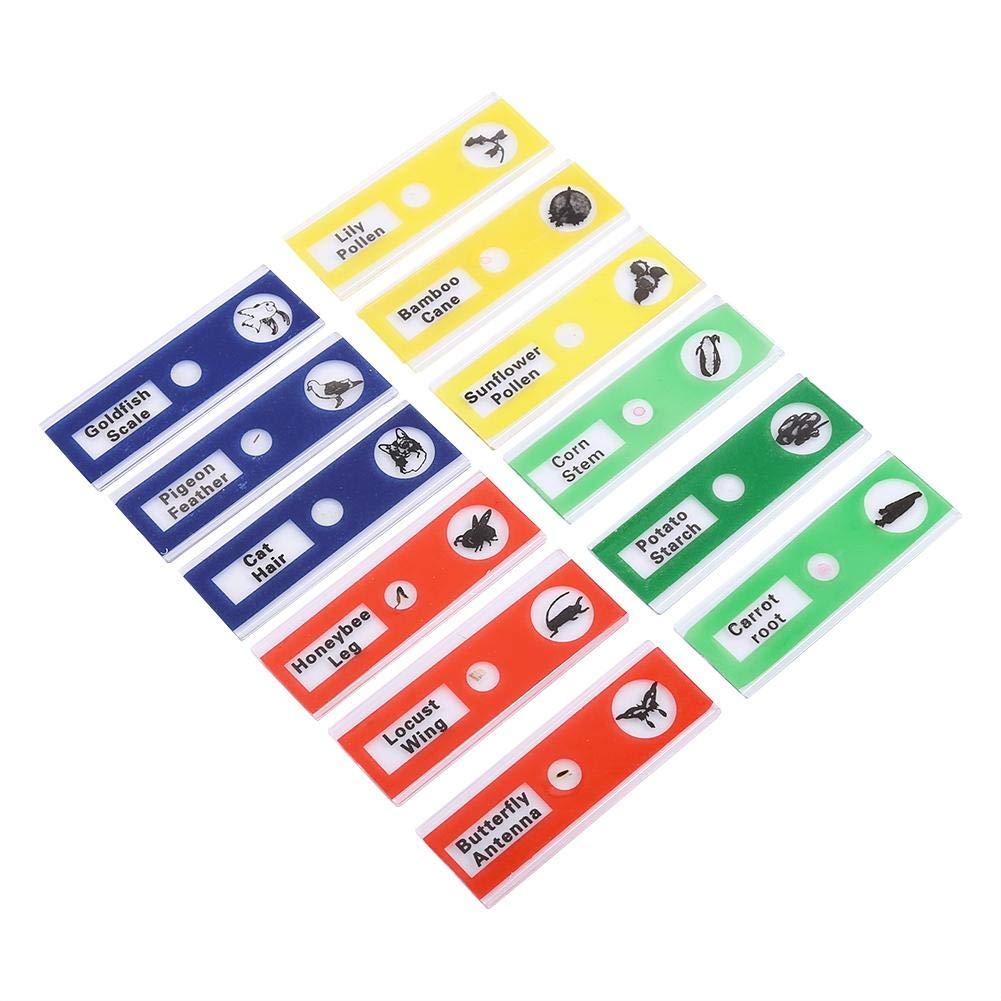 1# Riuty Blank Microscope Slides 12pcs Plastic Prepared Microscope Slides Animals Insects Flowers Plants for Kids /& Students