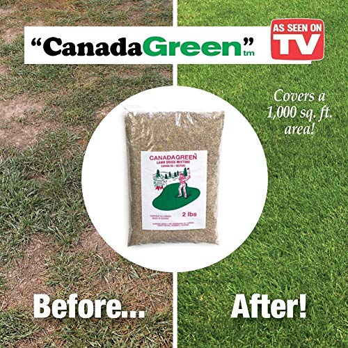 Canada Green Grass Seed - 8 Pounds - Covers up to 5,000 sq. ft. ()