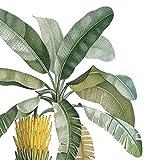 Paperproducts Design Banana Palm Beverage Napkins, 5 x 5'', Multicolor