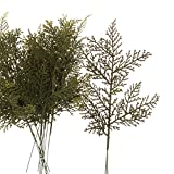 Factory Direct Craft Package of 12 Artificial Plastic Green Cedar Pine Stems