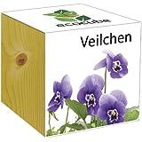 Extragifts ecocube Viola - piante nel cubo di legno