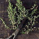 500 Seeds, Thyme Herb (Thymus vulgaris) Seeds By Seed Needs
