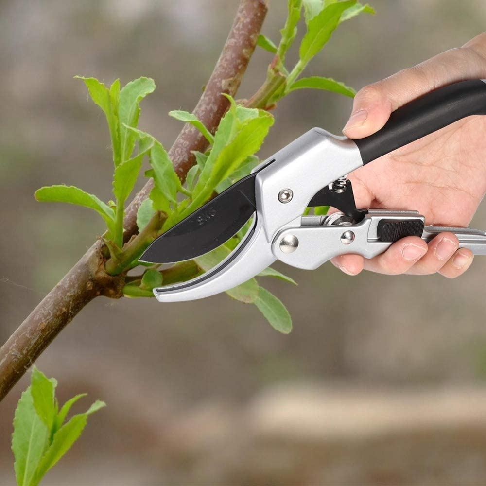 Tijeras de podar para árboles frutales de jardín, herramienta de corte de árboles, herramienta de corte de árboles: España: Amazon.es: Jardín