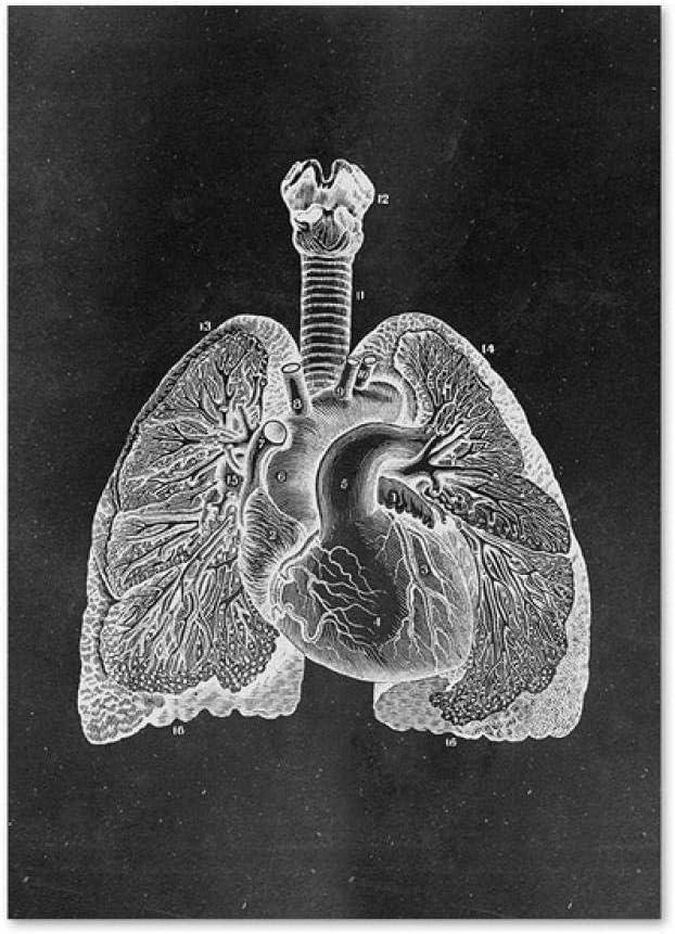 JCYMC Leinwand Bild Muskel Fu/ß Knochen Herz Anatomie Skelett Poster Wandkunst Drucke Home Decor Geschenk Pm12Mw 40X60Cm Rahmenlos