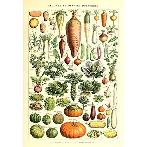 Identification Chart - Meishe Art Vintage Poster Print Art Kitchen Vegetable Identification Reference Chart Carrot Pumpkin Potato Botanical Science Plant Wall Decor (12.99'' x 19.69'')