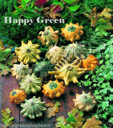 (SHENOT CROWN OF THORNS - GOURD - 35 SEEDS - Cucurbita Pepo Ornamental Pumpkin)