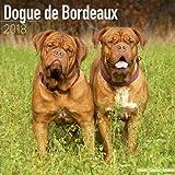 Dogue de Bordeaux Calendar - Dog Breed Calendars - 2017 - 2018 wall Calendars - 16 Month by Avonside
