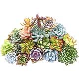 Babyney 400 Pcs Lithops Succulent Seeds Rare Living Stones Plants Cactus Home Décor