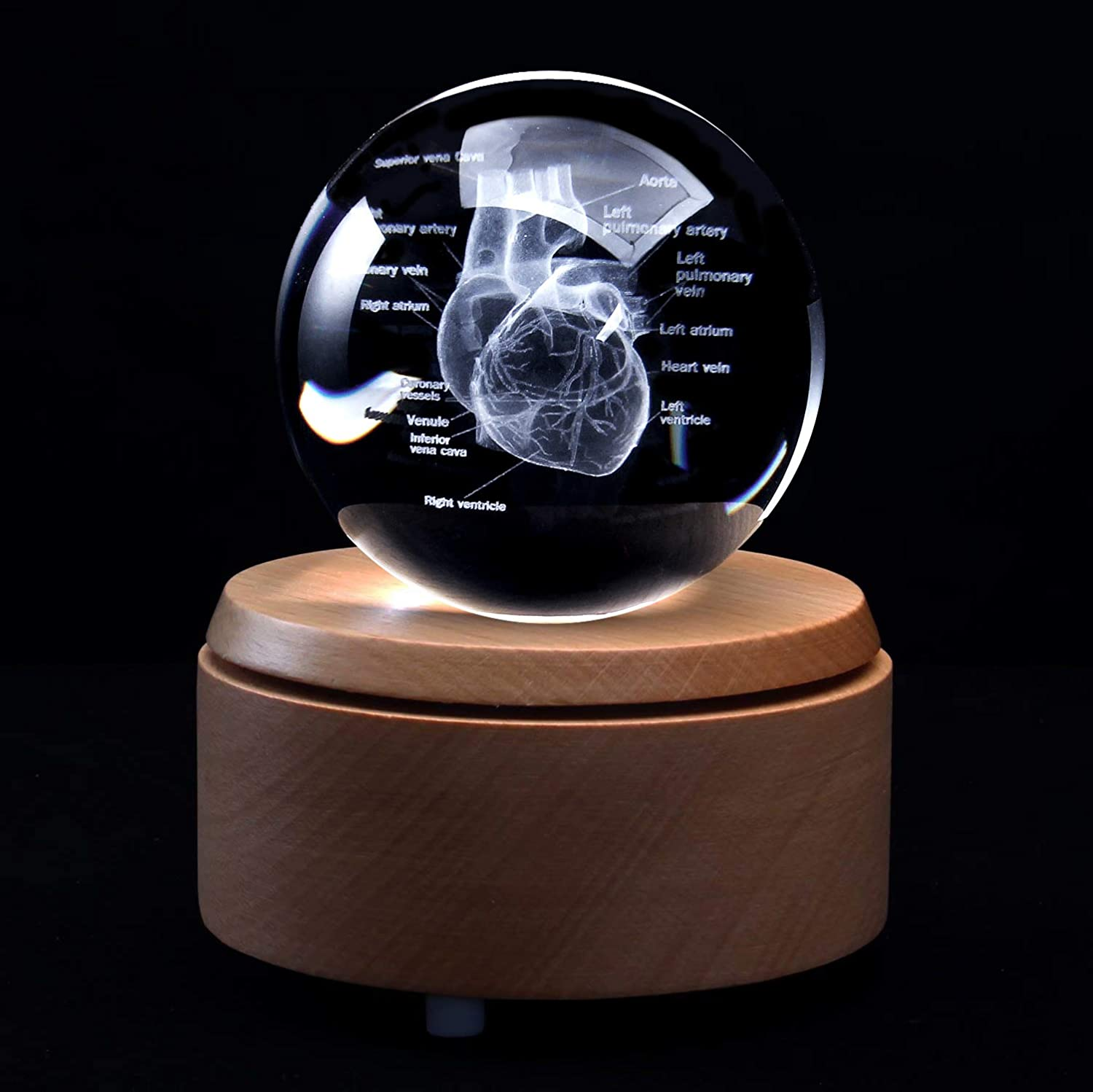 XINDAM 3D Human Heart with Labels Anatomical Model Paperweight(Laser Etched) in Crystal Glass Ball Science Gift (Included LED Base)