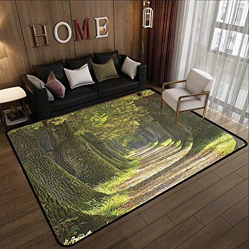(Small Rugs,Vivid Environment Decor,Alley with Oak Trees Scenic Perspective Picture,Green Olive and Grey 78.7