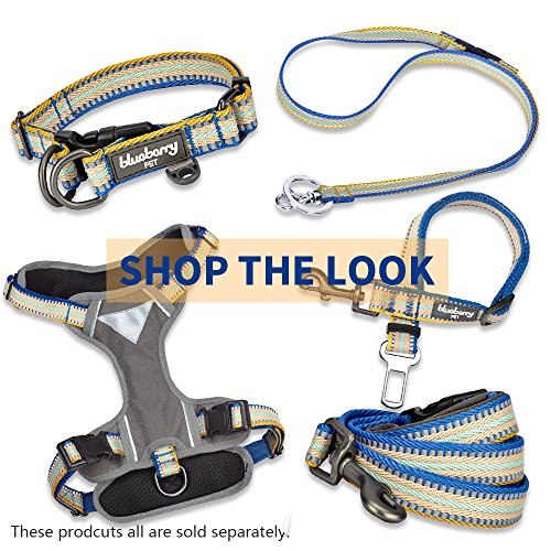 Image of Blueberry Pet 8 Colors 3M Reflective Multi-Colored Stripe Dog Leash with Soft & Comfortable Handle, 4 ft x 1