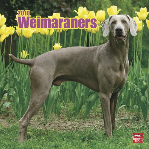Weimaraners 2010 Square Wall (Multilingual Edition)