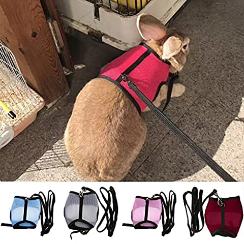 Rockruck Rabbits Ferret Guinea Pig Mesh Walk-Vest Pet Harness and Leash for Small Pets (S, Red) (Ferret Harnesses And Leashes)