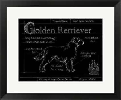 Amazon great art now blueprint golden retriever by ethan harper great art now blueprint golden retriever by ethan harper framed art print wall picture black malvernweather Image collections