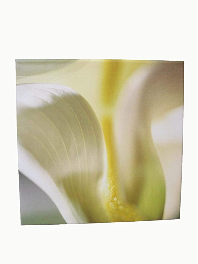 Desconocido Cuadro Plotter Canvas Madera PEQUEÑO Flor Amarillo Blanco Capullo: Amazon.es: Hogar