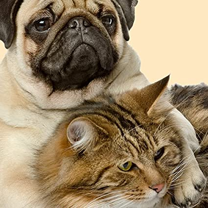 """NEW FAWN PUG CUDDLING TABBY CAT ON CREAM /'BEST FRIENDS/' 16/"""" Pillow Cushion Cover"""