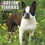 Just Boston Terriers 2018 Wall Calendar (Dog Breed Calendar)