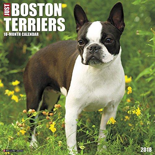 Just Boston Terriers 2018 Calendar