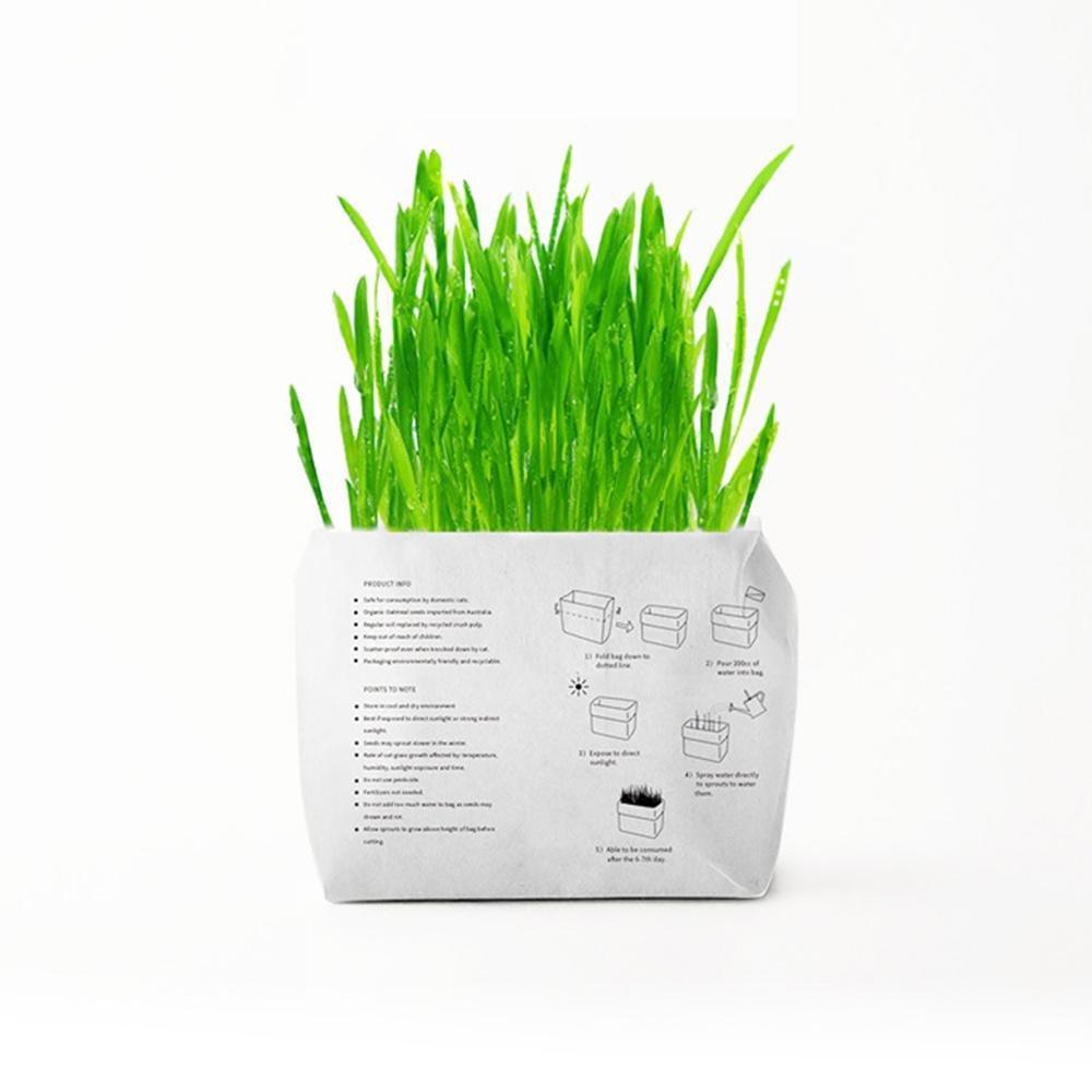 KOBWA - Kit de cultivo de hierba de trigo pequeña sin jabón para gatos, súper fácil de cultivar, con maceta de papel creativo, control de pelota natural ...