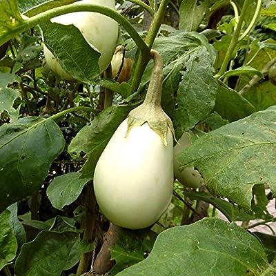 Gretel Hybrid Eggplant Garden Seeds - 100 Seeds - Non-GMO, White, Vegetable Gardening Seed - Solanum melongena