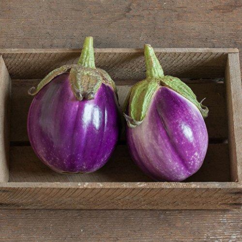 David's Garden Seeds Eggplant Rosa Bianca SL2605 (Purple) 50 Non-GMO, Heirloom Seeds