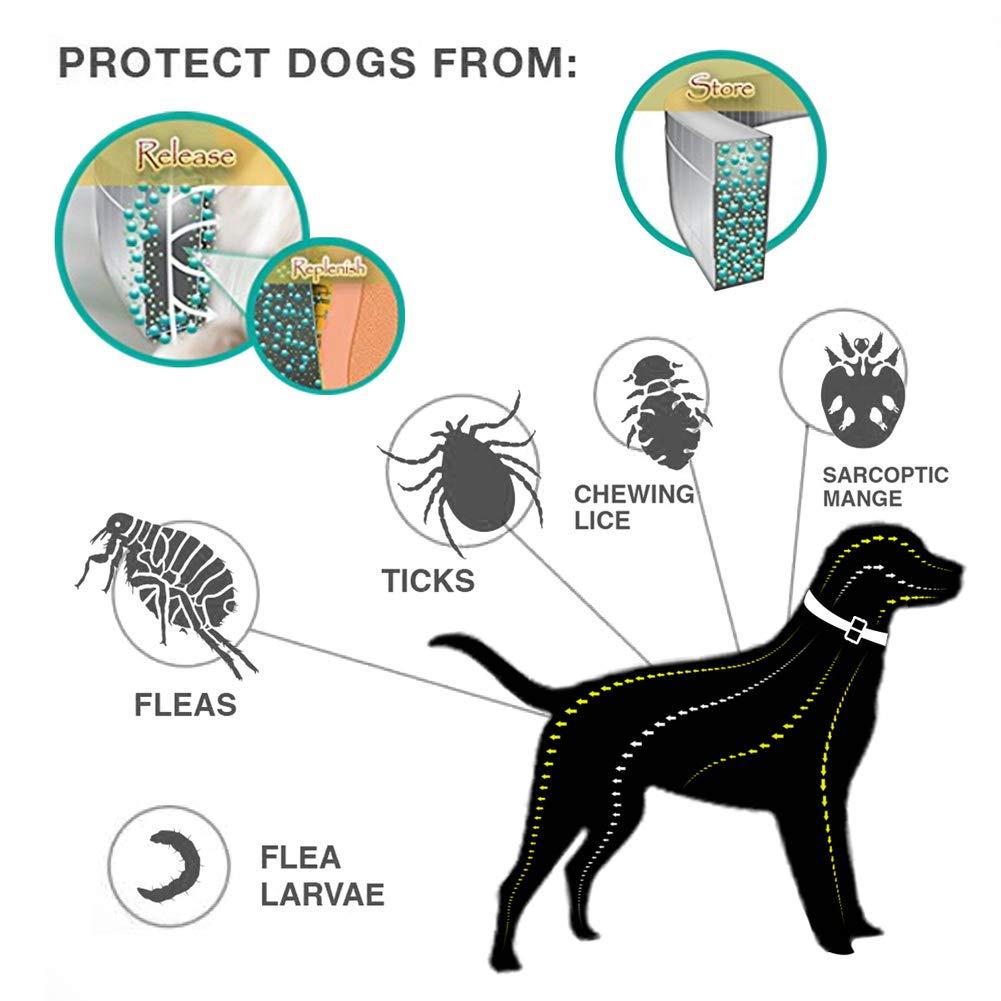 Crazywind Collare Anti Insetti zanzare pulci Tick Impermeabile a Lunga Durata 8/Mesi di Protezione